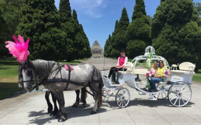 Live Horse and Carriage On Site – Unique Carriage Hire