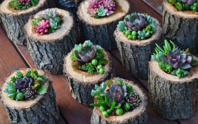 Vertical Walls and Succulent Creations